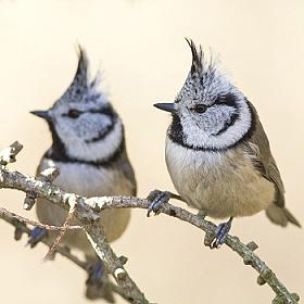 ptáci žijící na souši