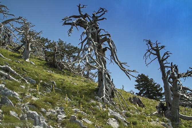 Mali i Çikës (j albánie)