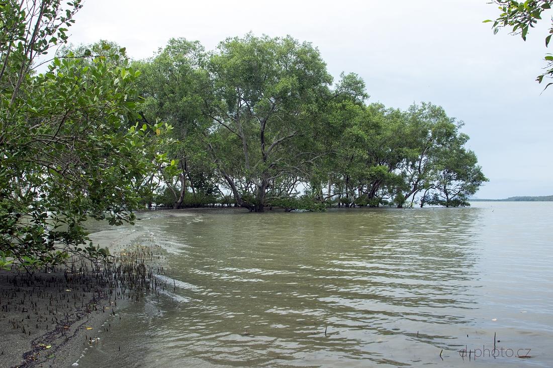 mangrovy 1