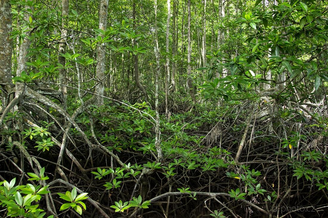 mangrovy 4