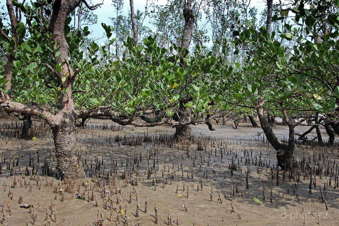 mangrovy 28