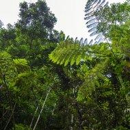 tropický les